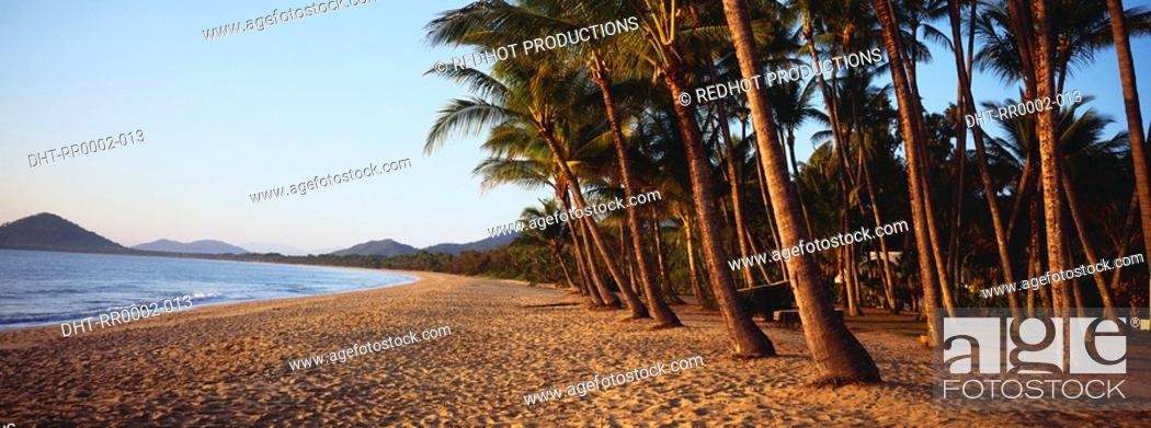 Stock Photo: Beach and palm trees.