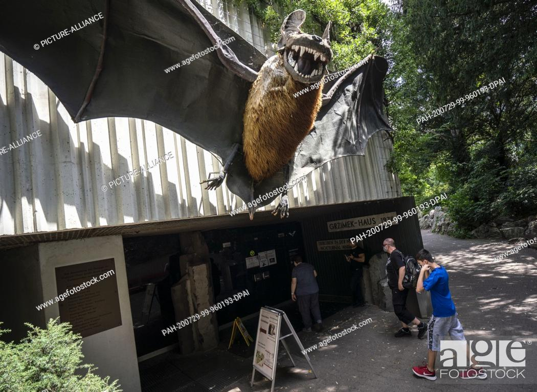 Stock Photo: 28 July 2020, Hessen, Frankfurt/Main: An oversized bat hovers above the entrance to the Grzimek House at Frankfurt Zoo. In Europe's largest nocturnal animal.