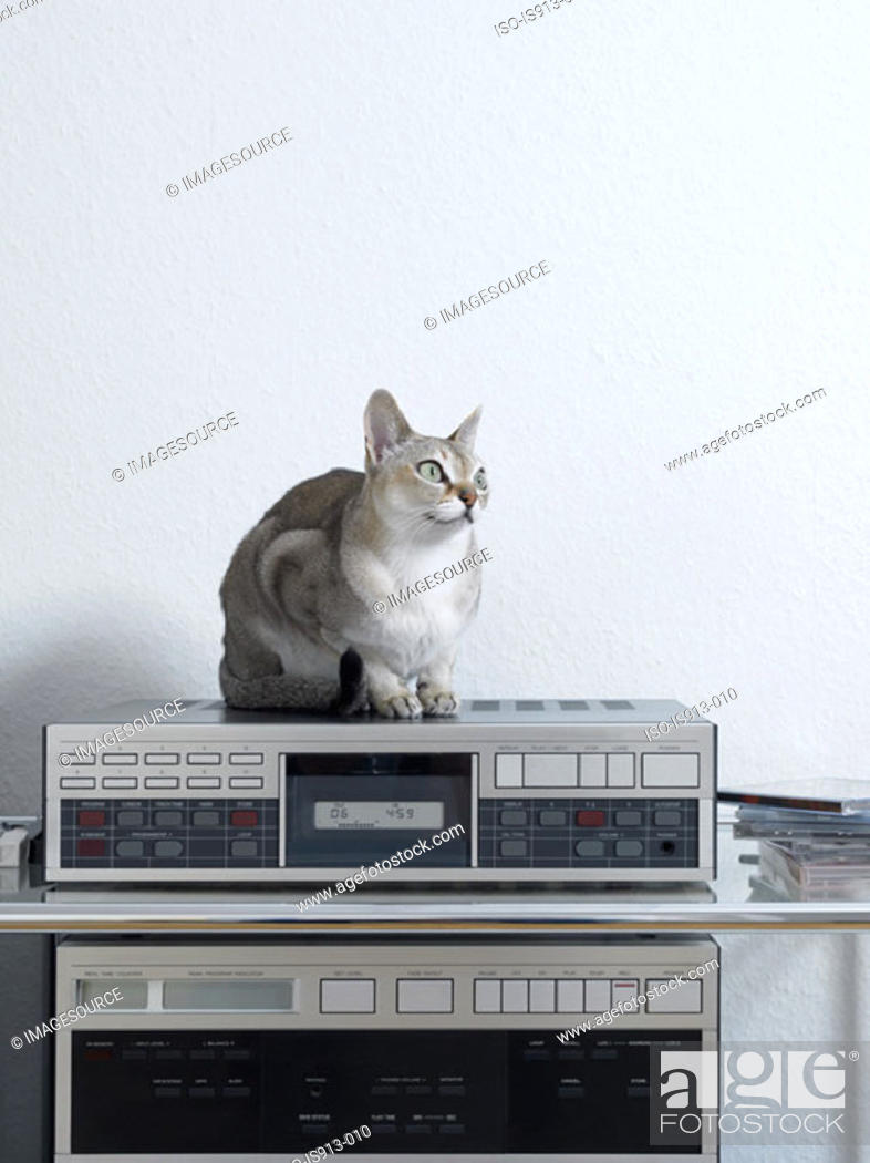 Stock Photo: Cat sitting on a stereo.