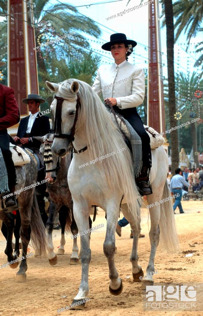 Stock Photo: Andalusian horse Equus przewalskii f. caballus, Feria del Caballo.