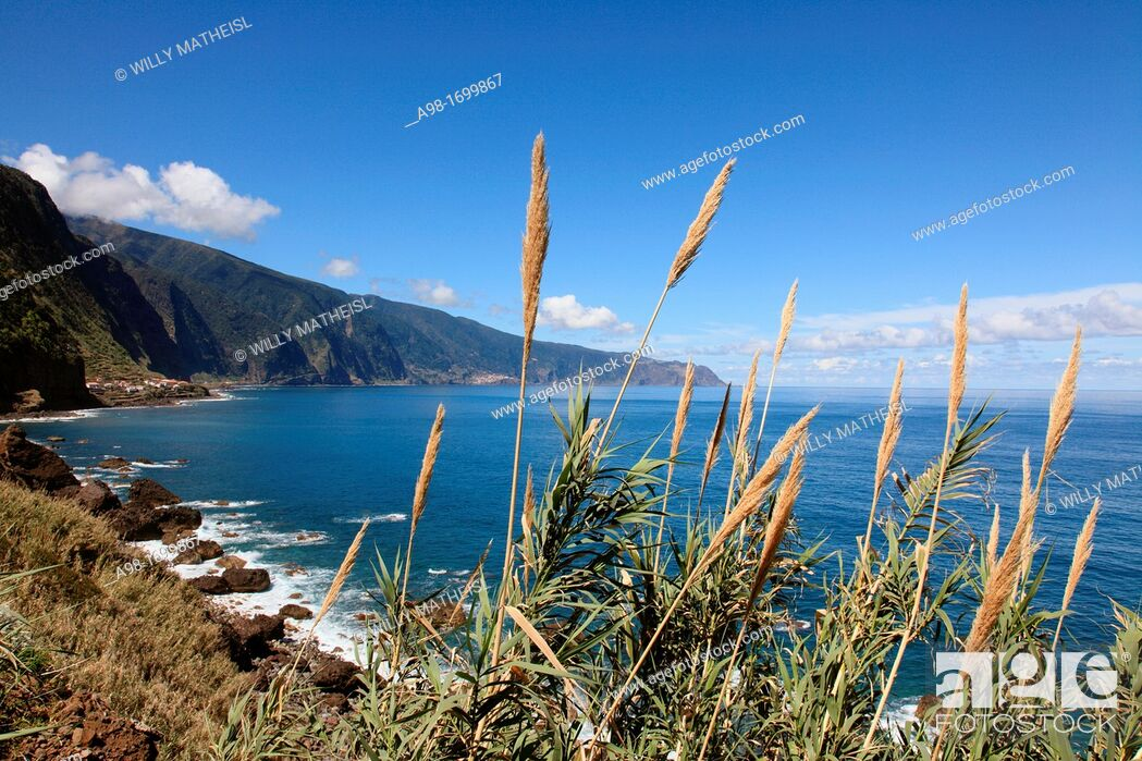 Stock Photo: Reed at the North Shore of Madeira, Portugal, Europe.