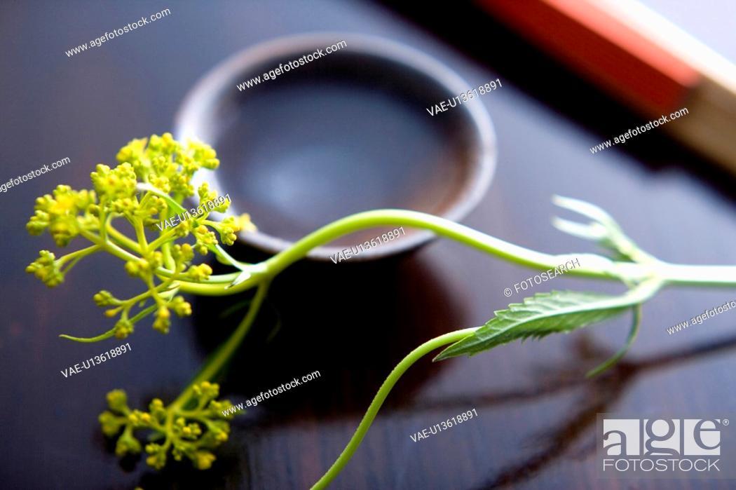 Stock Photo: Patrinia scabiosaefolia.
