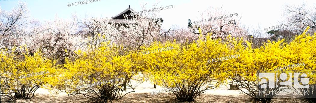 Stock Photo: season, panorama, scene, landscape, nature, spring, panoramic view.