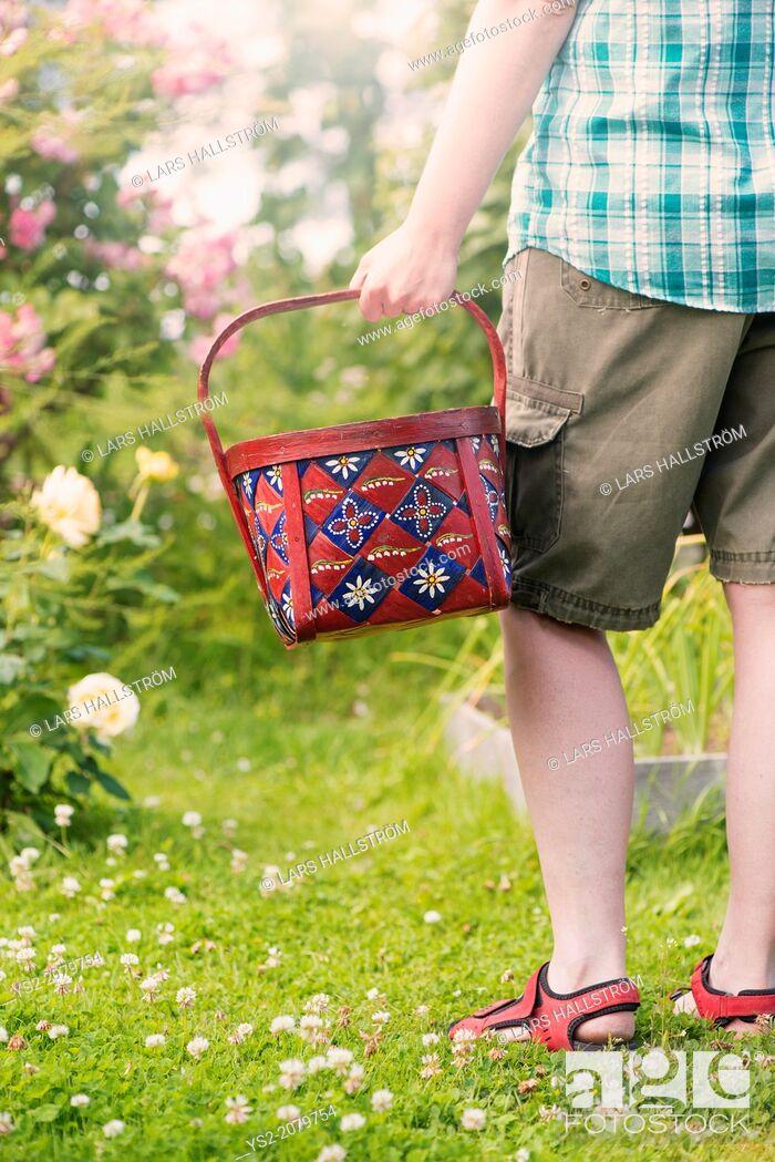 Stock Photo: Woman holding basket in vegetable garden, Sweden.