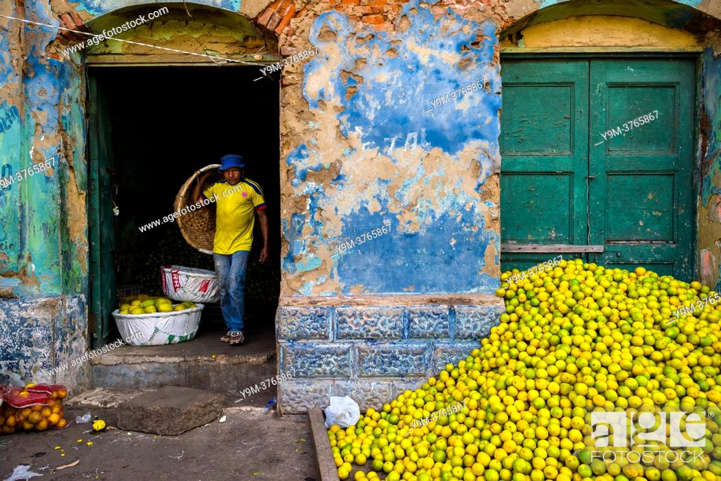 Stock Photo: A Colombian worker carries an empty basket while unloading green oranges (for juicing) in an open-air fruit market in Barranquilla, Colombia.
