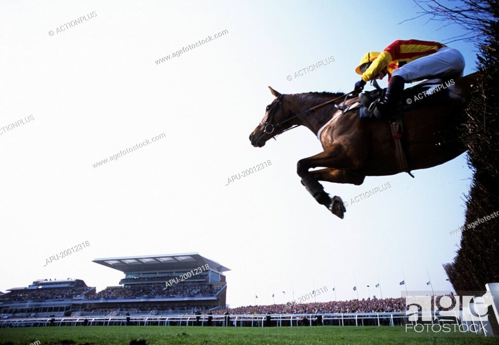 Stock Photo: Jockey on horse clears thicket fence on his way to finish line.
