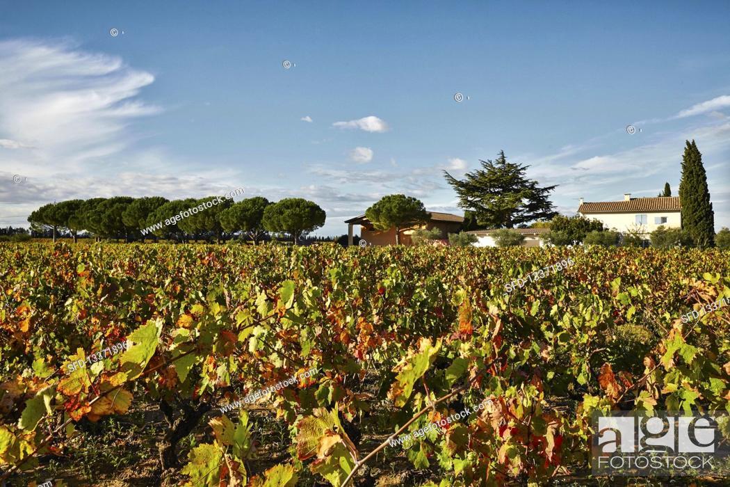 Stock Photo: Vineyard landscape, Domaine Perrieres Kreydenweiss, Rhone, France.
