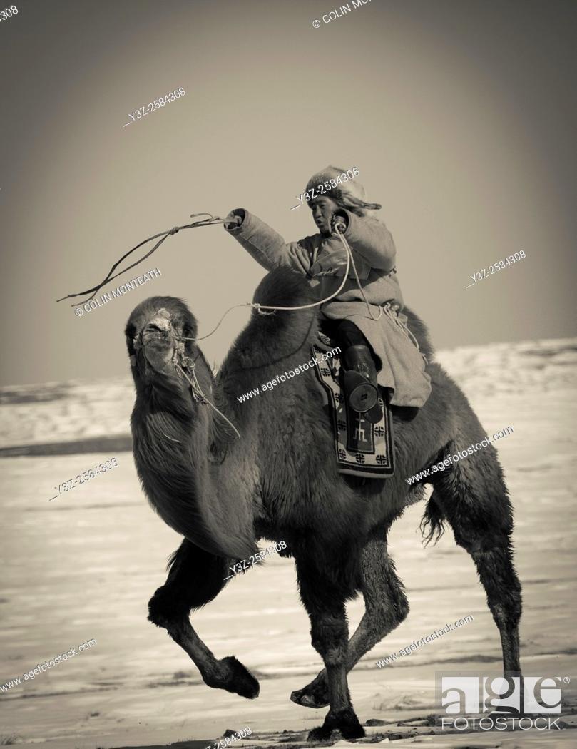 Imagen: Bactrian camel race, 25km across winter landscape of Gobi desert during Bulgan's 'festival of a thousand camels' , Mongolia.