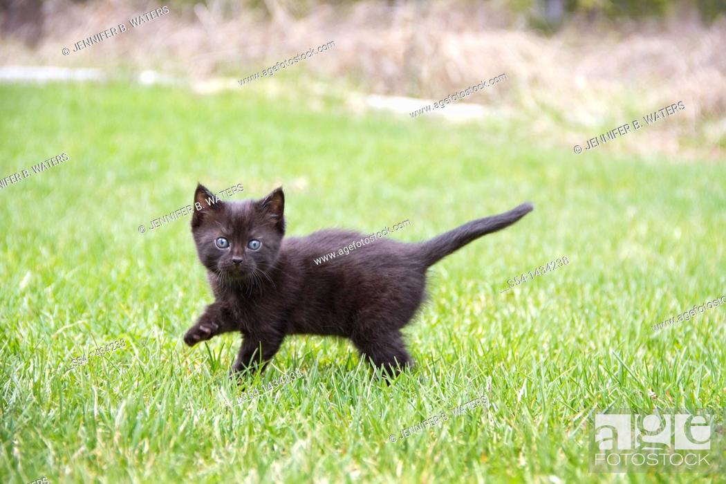Stock Photo: A black kitten outdoors in a yard.