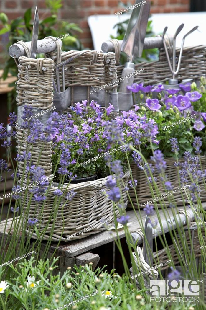Stock Photo: Lavender and bellflowers in wicker baskets.