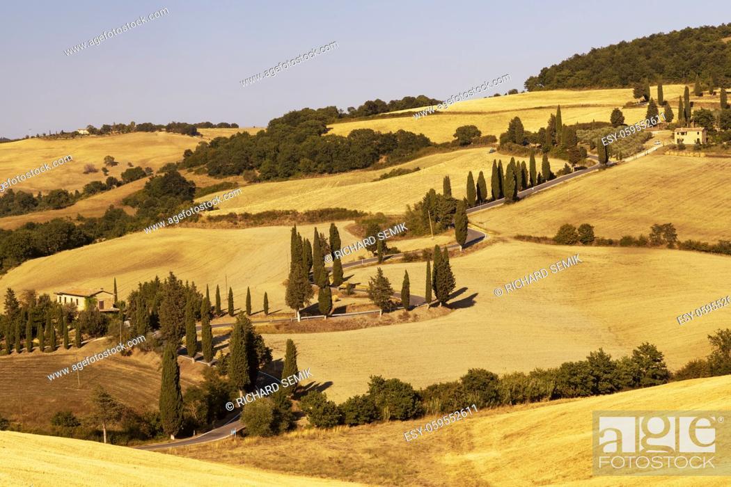 Photo de stock: Cipressi di Monticchielo, Typical Tuscan landscape near Montepulciano, Italy.