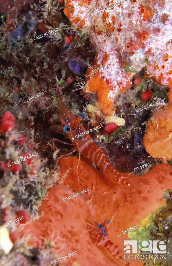 Stock Photo: Marine Life.