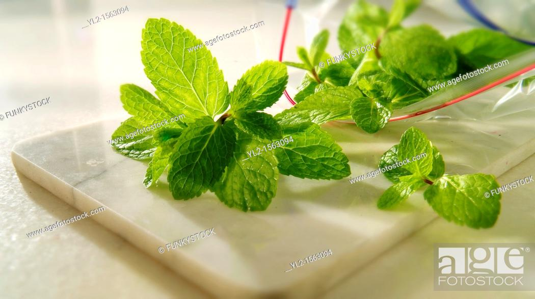 Stock Photo: Fresh Mint Leaves being packed.