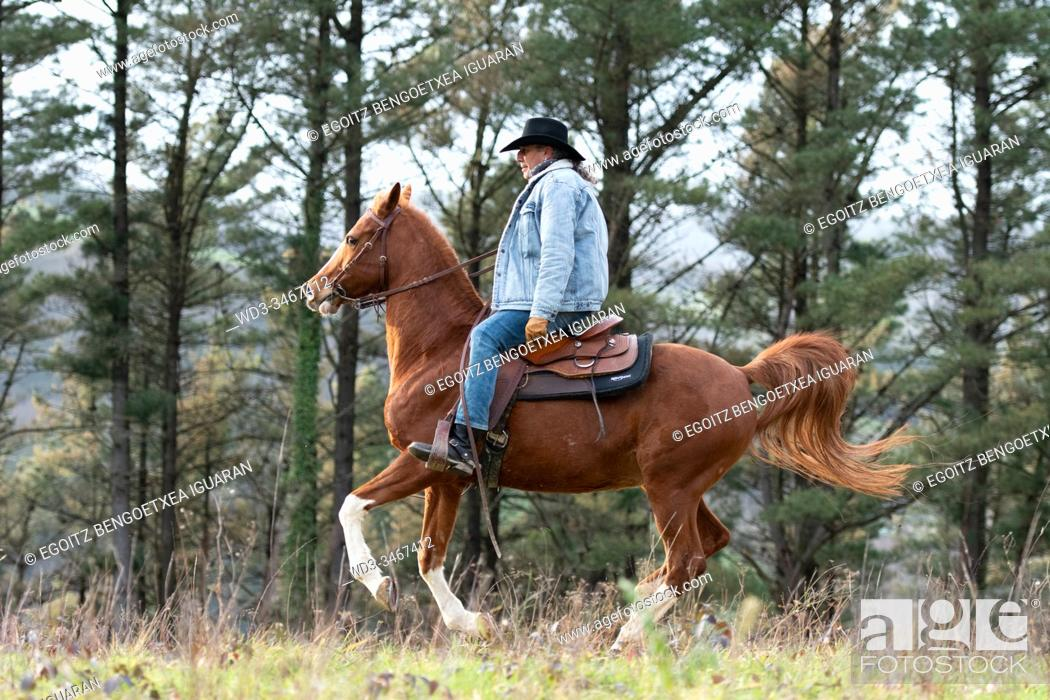 Stock Photo: A veteran cowboy riding his arabian horse in the forest.