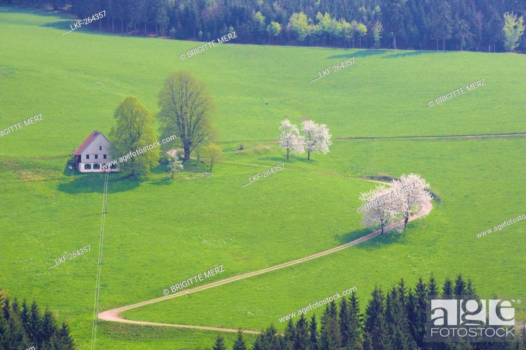 Stock Photo: Spring day near St. Maergen, Black Forest, Baden-Wuerttemberg, Germany, Europe.
