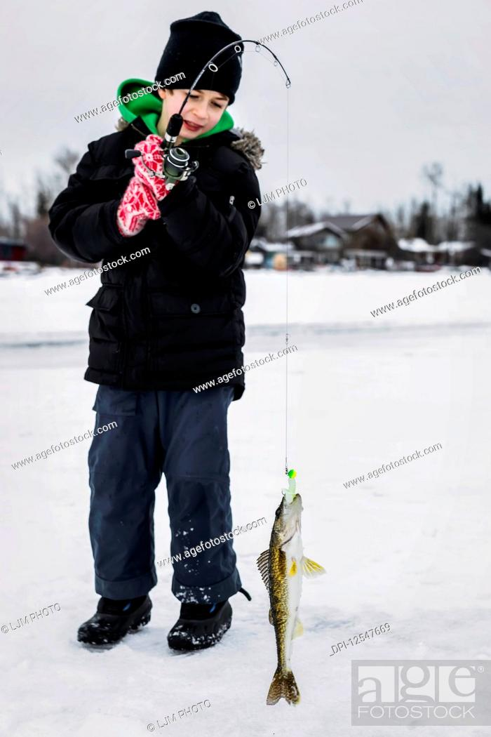 Stock Photo: A young boy catching a Walleye while ice fishing on Lake Wabamum during a winter family outing; Wabamun, Alberta, Canada.