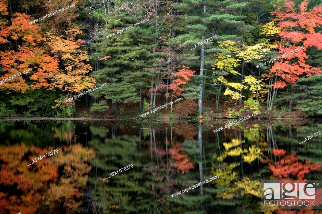 Stock Photo: Ballard State Forest      Reflections of autumn in Ballard Pond  Located in Derry, New Hampshire USA.