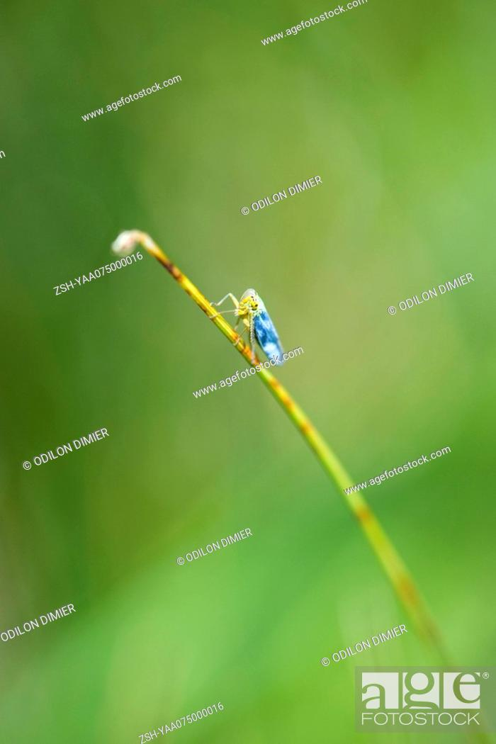Stock Photo: Insect perched on broken stem of flower.