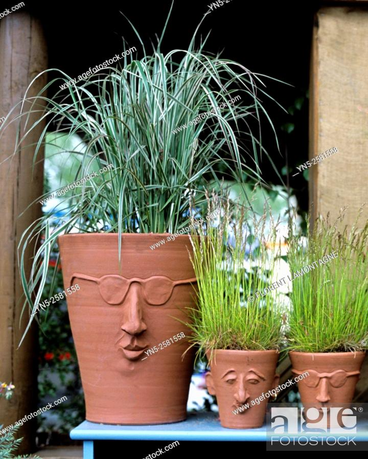 Stock Photo: Ambiance of grass plants in pot with funny faces.