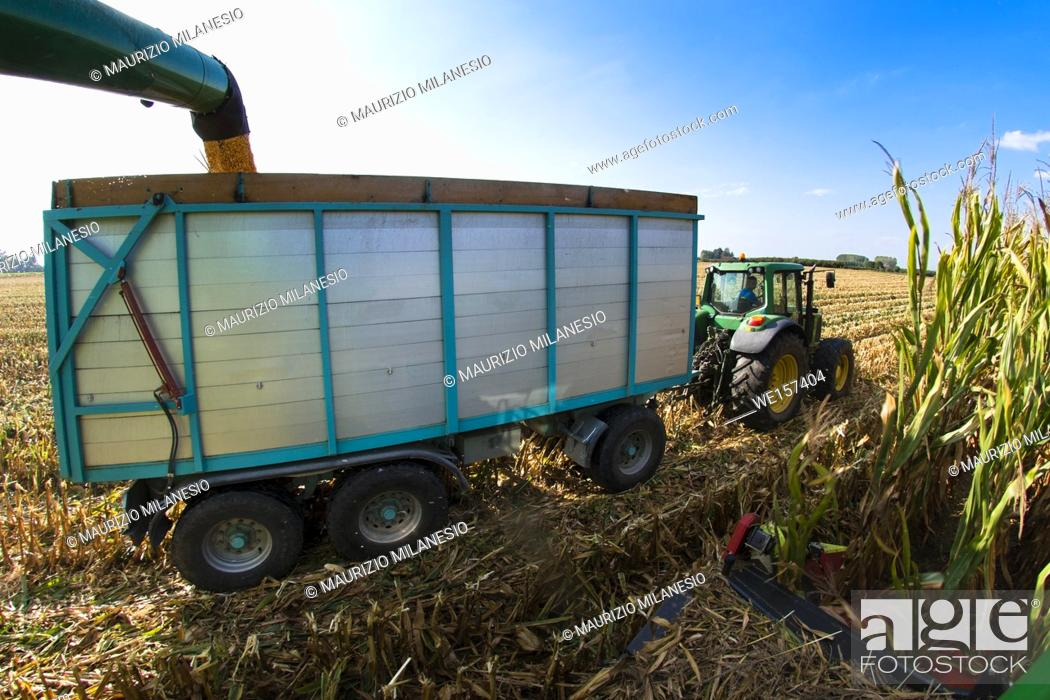 Stock Photo: Piedmont, Italy, View from the combine to the trailer and the tractor on the field, the harvester pours the corn into the tow.