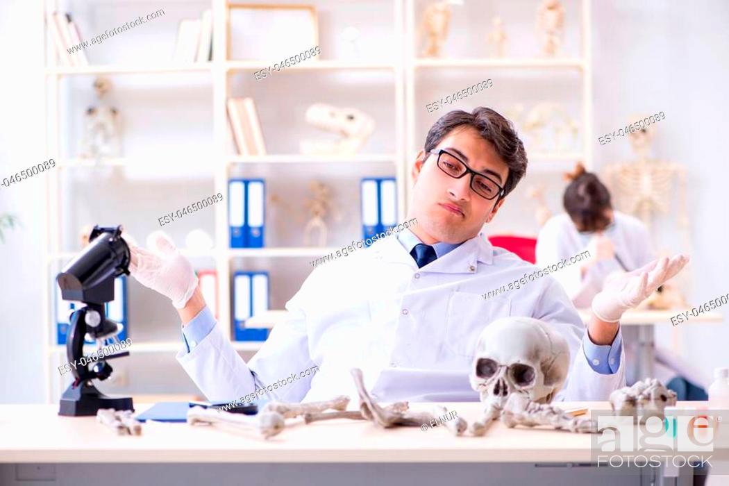 Stock Photo: Professor studying human skeleton in lab.