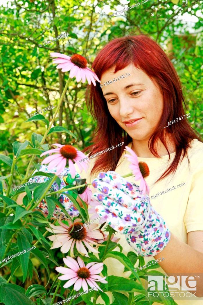 Stock Photo: Purple coneflowers and girl.
