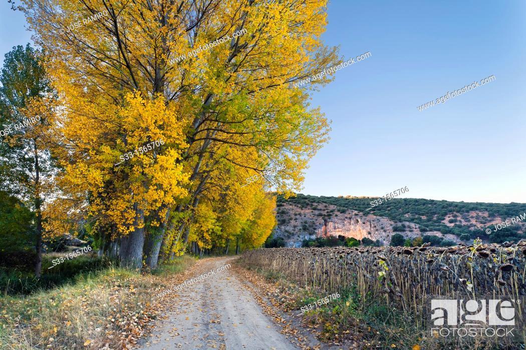 Stock Photo: The Sigüenza road in Aragosa  Guadalajara  Castilla la Mancha  Spain.