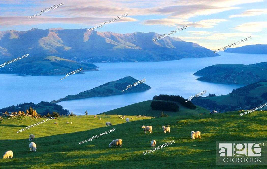 Stock Photo: Late evening light over Akaroa Harbour from near hilltop, Banks Peninsula, New Zealand.