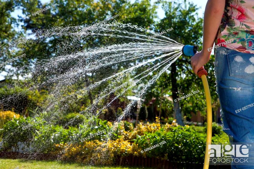 Stock Photo: Woman's hand with garden hose watering plants and lawn.