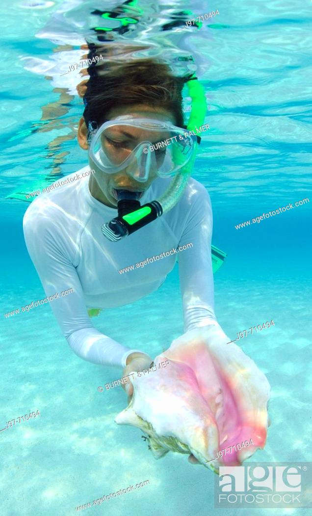Stock Photo: A snorkeler finds a pink conch shell in the shallows off Rainbow Beach, Eleuthera, Bahamas, Atlantic Ocean.