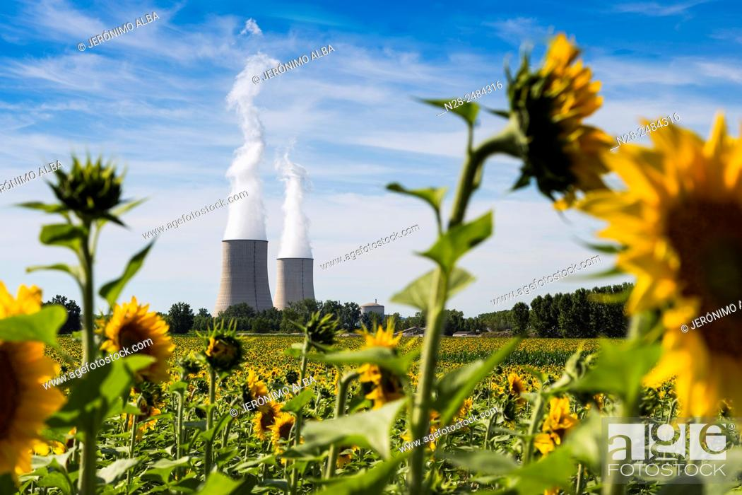 Stock Photo: Golfech Nuclear Power Plant and sunflowers field, Tarn et Garonne, France, Europe.