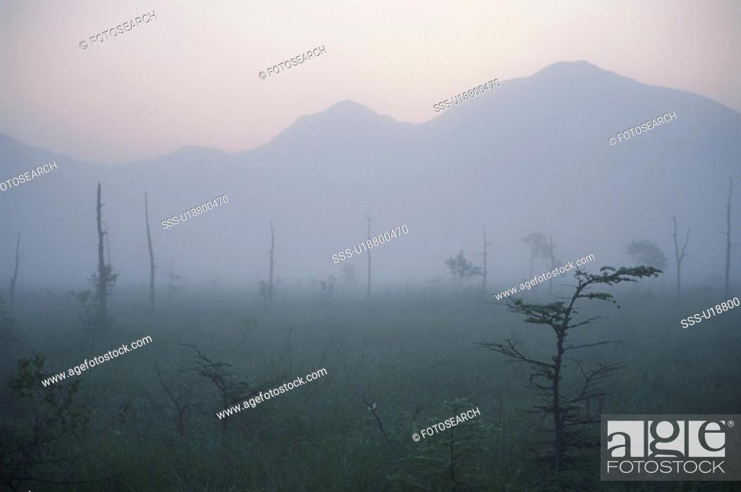 Stock Photo: Senjogahara Meadows In The Morning Mist.