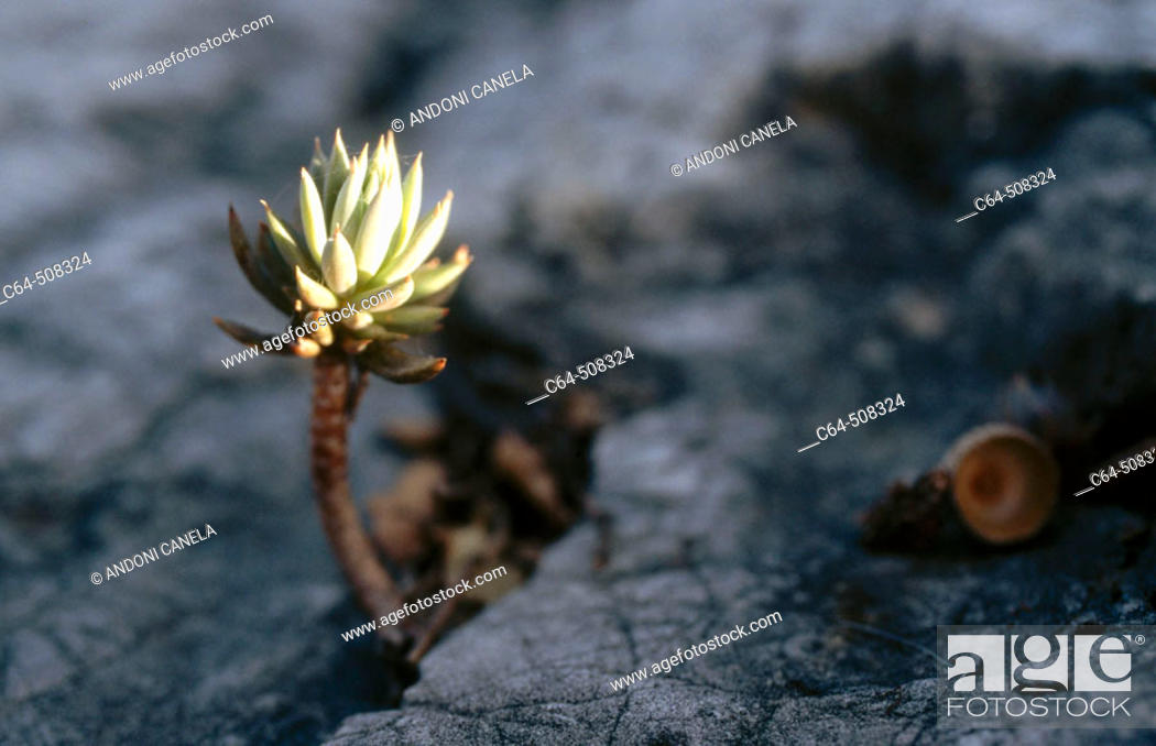 Stock Photo: Grazalema. Cadiz province. Andalucia. Spain.
