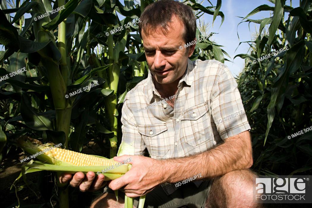 Stock Photo: Man holding corn cob.