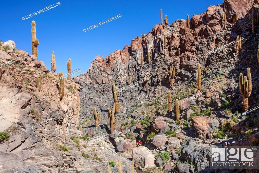 Stock Photo: Trekking in Puritama river, Guantin Valley or ravine , near San Pedro de Atacama, Atacama desert. Region de Antofagasta. Chile.