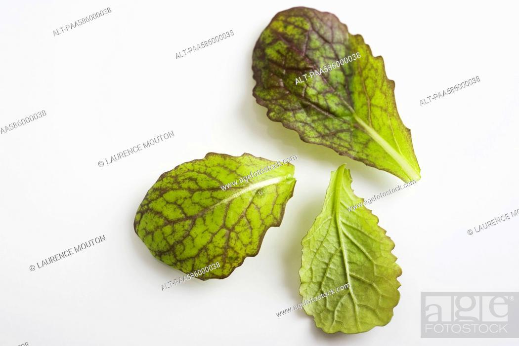 Stock Photo: Mustard greens.