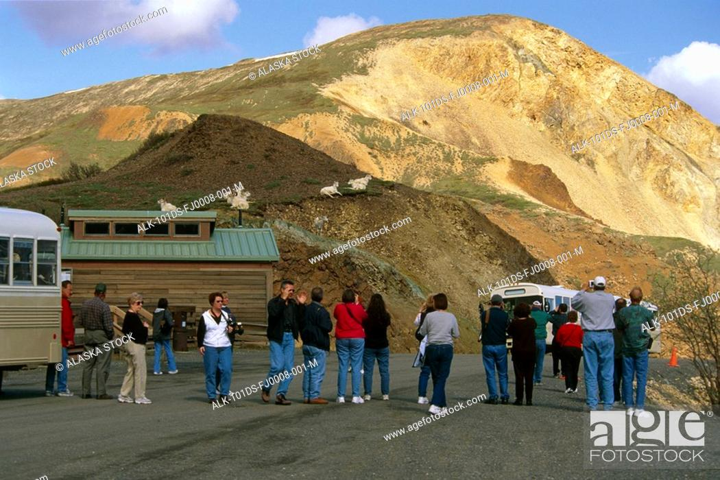Photo de stock: Visitors View Dall Sheep Rams @ Rest Stop Denali NP IN AK Summer.