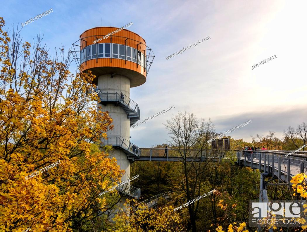 Stock Photo: Treetop walkway in Hainich National Park, Thuringia, Germany.