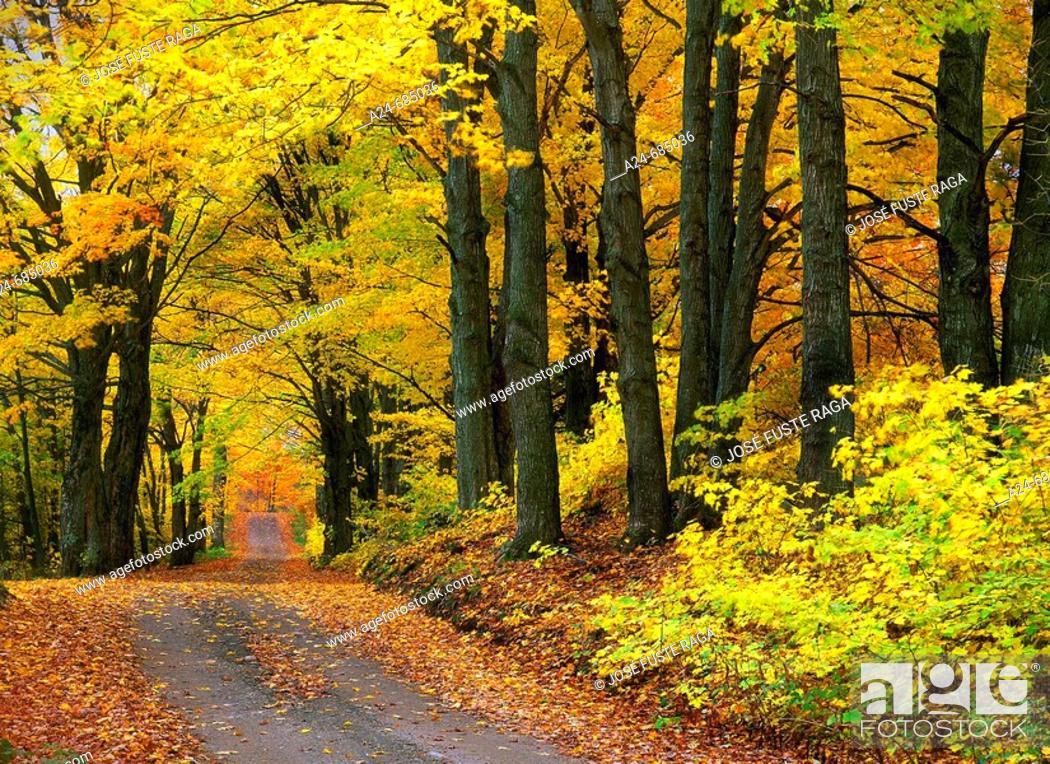 Stock Photo: Autumn colors. New England, USA (Nov. 2007).