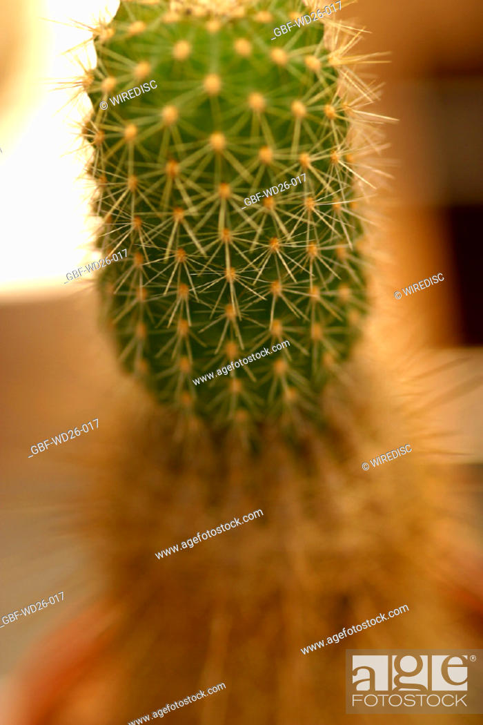 Stock Photo: Flowers, cactus, nature.