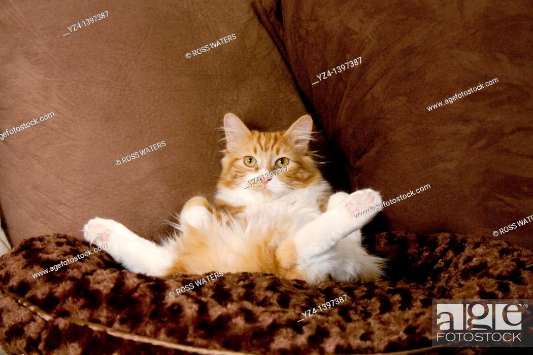 Stock Photo: An orange tabby cat laying in a pet bed.