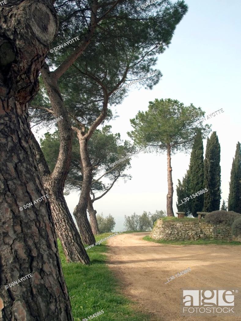 Stock Photo: Tuscany countryside.