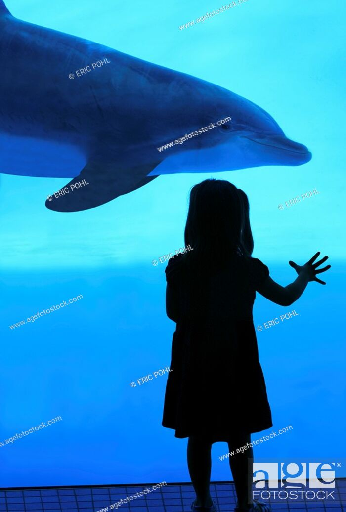 Stock Photo: Girl watching bottlenose dolphins - Texas State Aquarium, Corpus Christi, Texas.