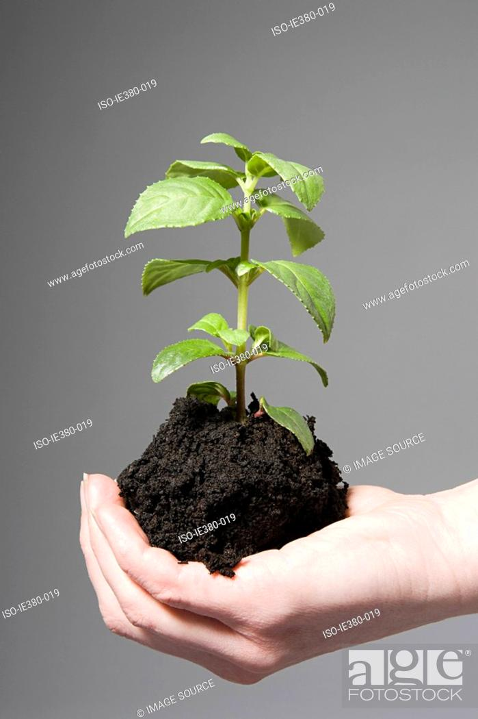 Stock Photo: Person holding soil and a sapling.