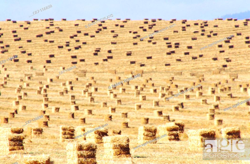 Stock Photo: Hay bales. Oregon. USA.