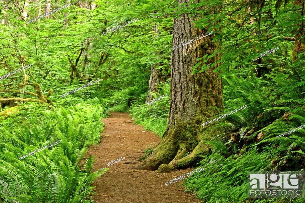 Stock Photo: A pathway cuts through lush spring vegetation.