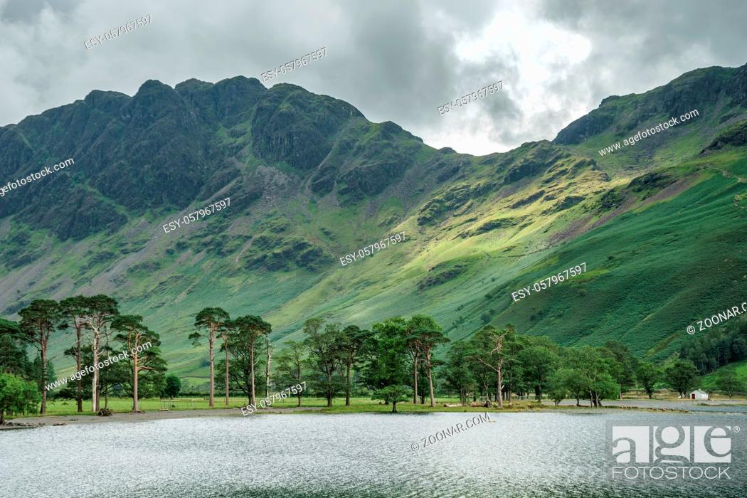 Stock Photo: View of the pine trees at Buttermere.