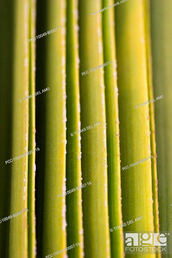 Stock Photo: Close-up of a green leaves creating a pattern of verticle lines.
