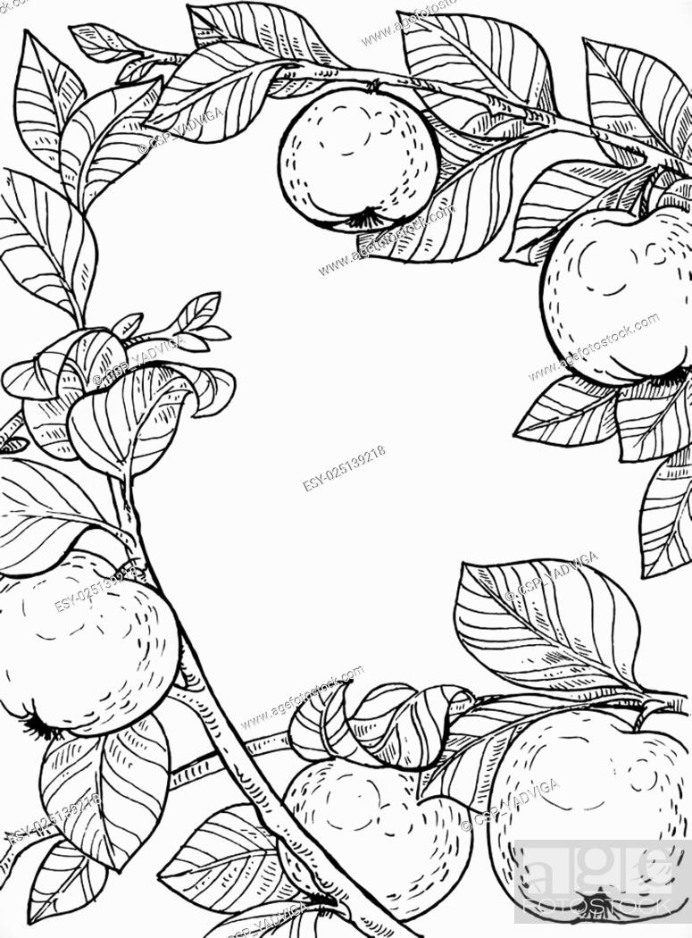 Stock Vector: Black and white drawing of branches with apples and leaves.