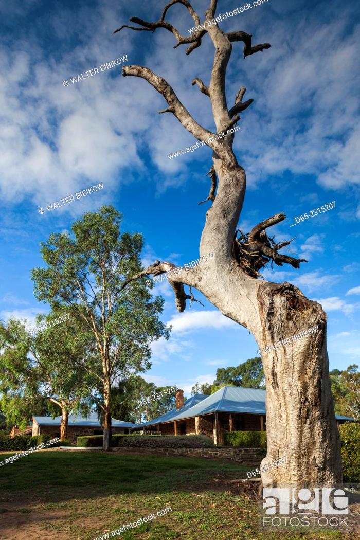 Stock Photo: Australia, South Australia, Barossa Valley, Rowland Flat, Jacob's Creek Winery, old winery buildings.